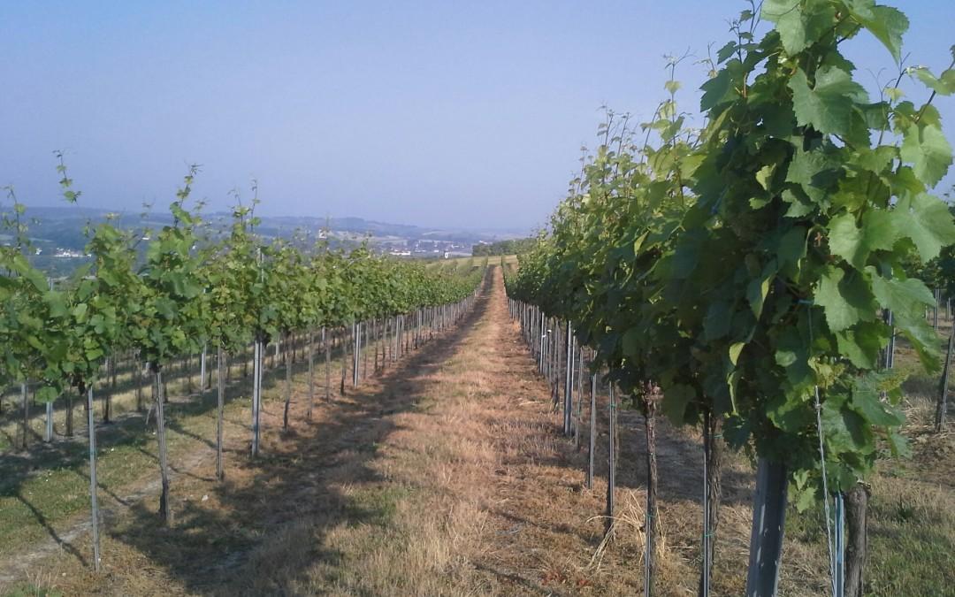 Weingartenzeie