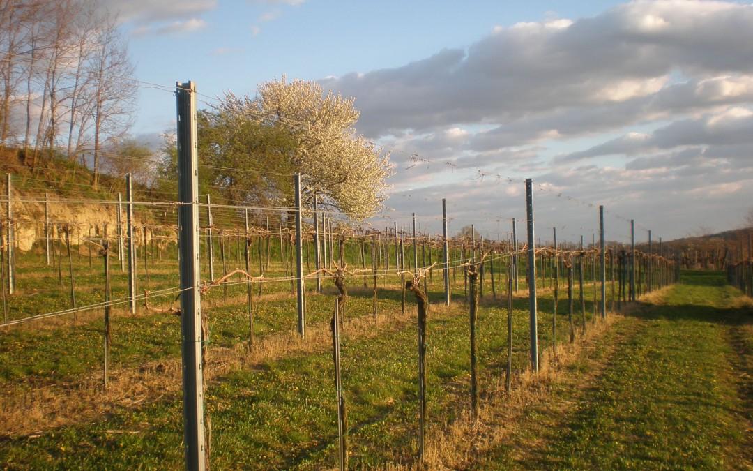 Winzerhof EM bei der Retzer Weinwoche 2015